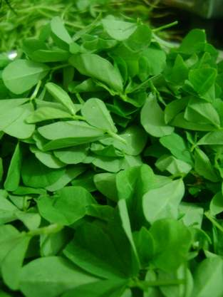 Chopped fenugreek leaves